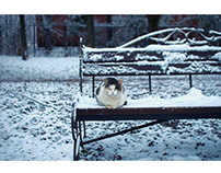 Evening, snow, old cat and classic bench ❄