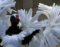 FIT Fowl Play Exhibit, Japanese Red-Crowned Cranes