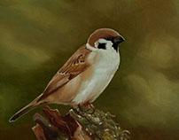 BIRDY NO.3