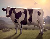 Raggio di sole: Cow