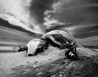 Skeleton Coast of the Tortugas
