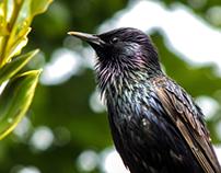 Starling Back Garden