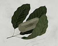 Kratom | Outside Magazine