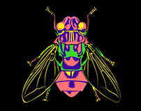 Colección insectos - CLIPPER
