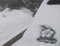 Got Aloha? Wayne NJ Snowstorm 3-5-2015