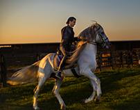 Photography : Monte Cristo Equestrian - Stallion