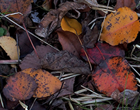 Autumn's Last Colors - Photography by mgk