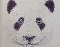 Biro Panda