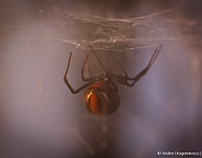 Dangerous Webs
