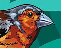 Aves // Colección