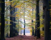 Autumn Morning in Ampsen