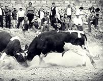 Una pelea de toros