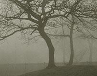 The Trees II