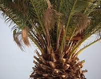 Palmtrees and texture
