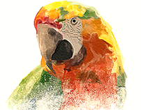 watercolor parrot painting