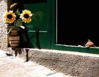 Caitlin Crowe Photography | Street Adventures