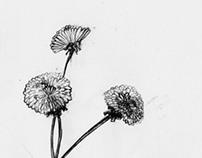 Fiori: Personal Sketchbooks