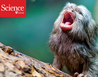 Marmoset Baby Talk