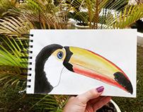 Ilustração - Tucano