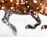 Snow Sparkle Horse