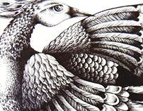 Bird Ink drawing