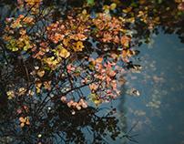 Fall in Helsinki