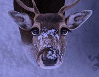Rudolf abandonado :( Forsaken Rudolf :(