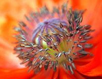 Flowers / Nature / Macro
