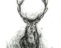 """""""Scribble Deer Series"""" ink & watercolour on paper"""