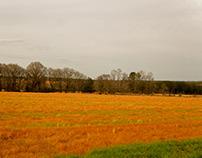 Rinascimento Agricolo