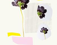 fleurs pt.2