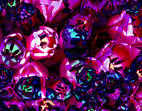 Kaleidoscope Tulips
