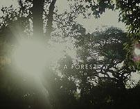 A Forest - Serie fotográfica