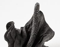 Dried Flora
