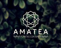 Amatea