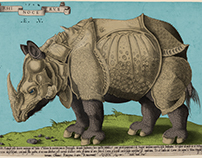 Dürer's Rhinoceros Colorised