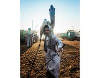 Camels market of Birqash
