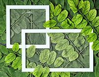 Green leaves creative background.Geometria