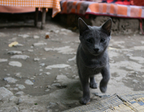 """2nd Edition """"Street cats of Morocco"""
