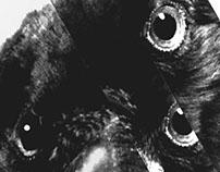 Crow wiki
