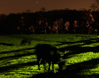 Grazing at Night