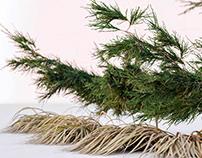 Juníperus sabína free 3d models