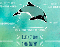 DESIGNERS FOR MAUI'S DOLPHINS
