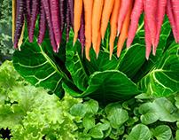Cultivar e Alimentar // TCC // Pesquisa