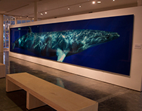 """Beautiful Whale"" At the Museum of Monterey"