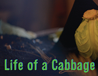 Life of a Cabbage