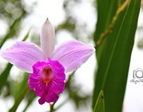 Orchide of the world