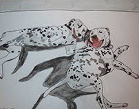 Dalmatians at play