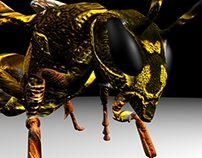 3D WASP MODEL