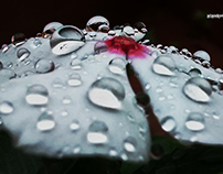 Droplets Photography